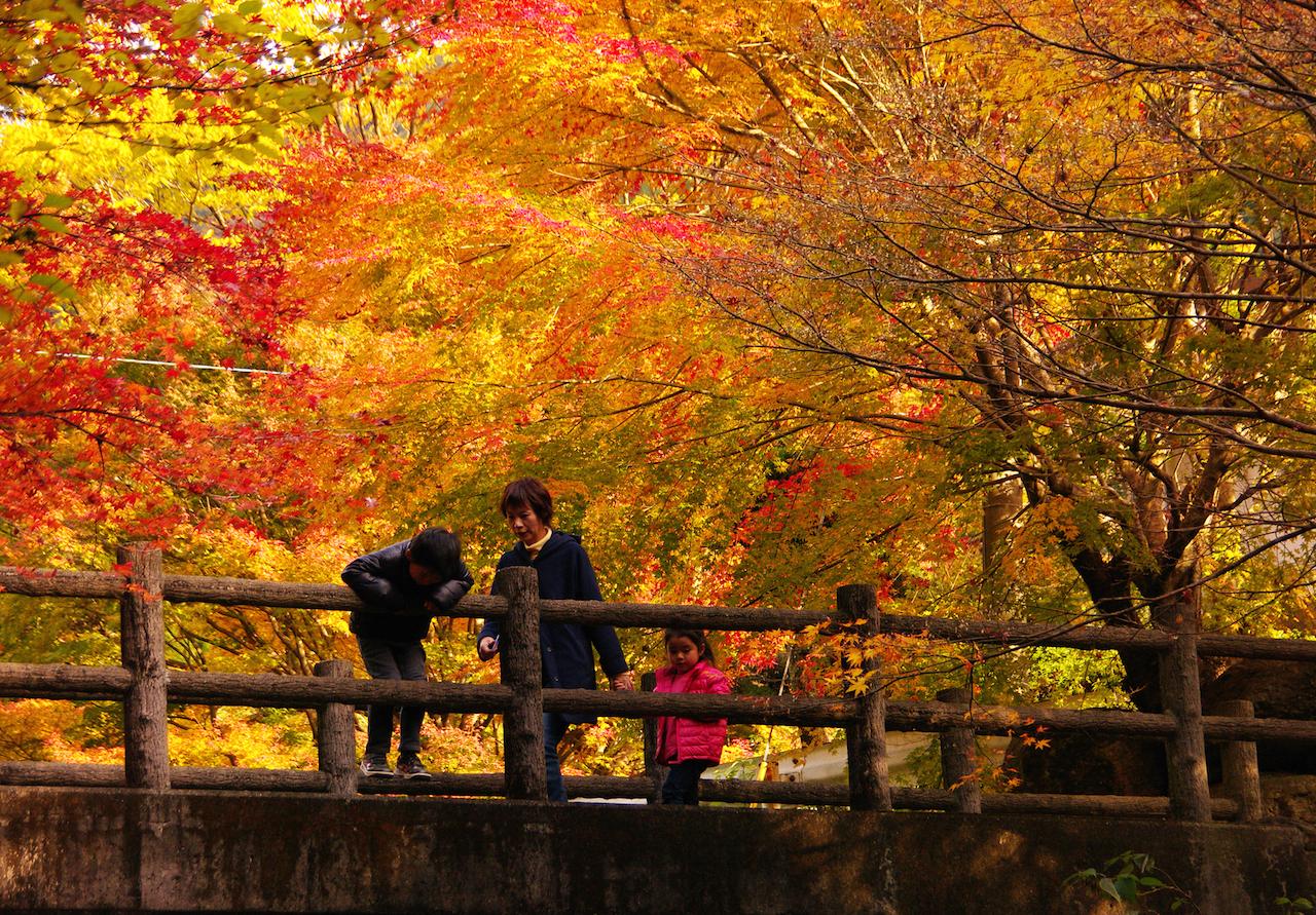 【全国紅葉の絶景】想いが紅葉を色づかせる、佐賀県の紅葉人気スポット