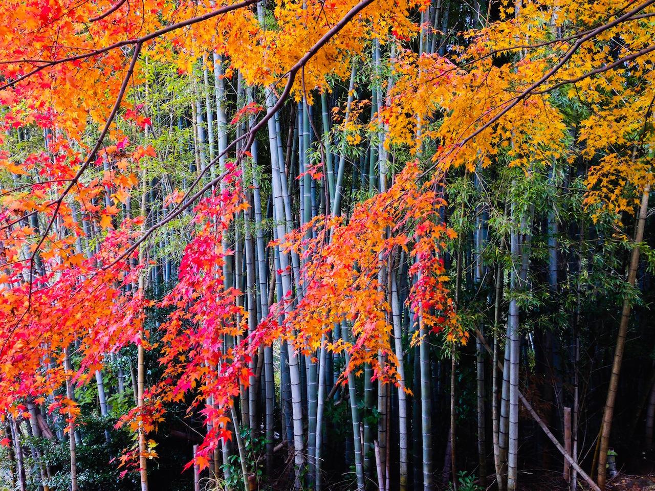 【全国紅葉の絶景】秋になるのを待っていた、長崎県の紅葉人気スポット