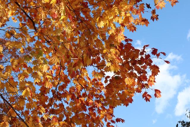 あなたはどれ?札幌周辺の紅葉を満喫できる4つの方法【北海道】