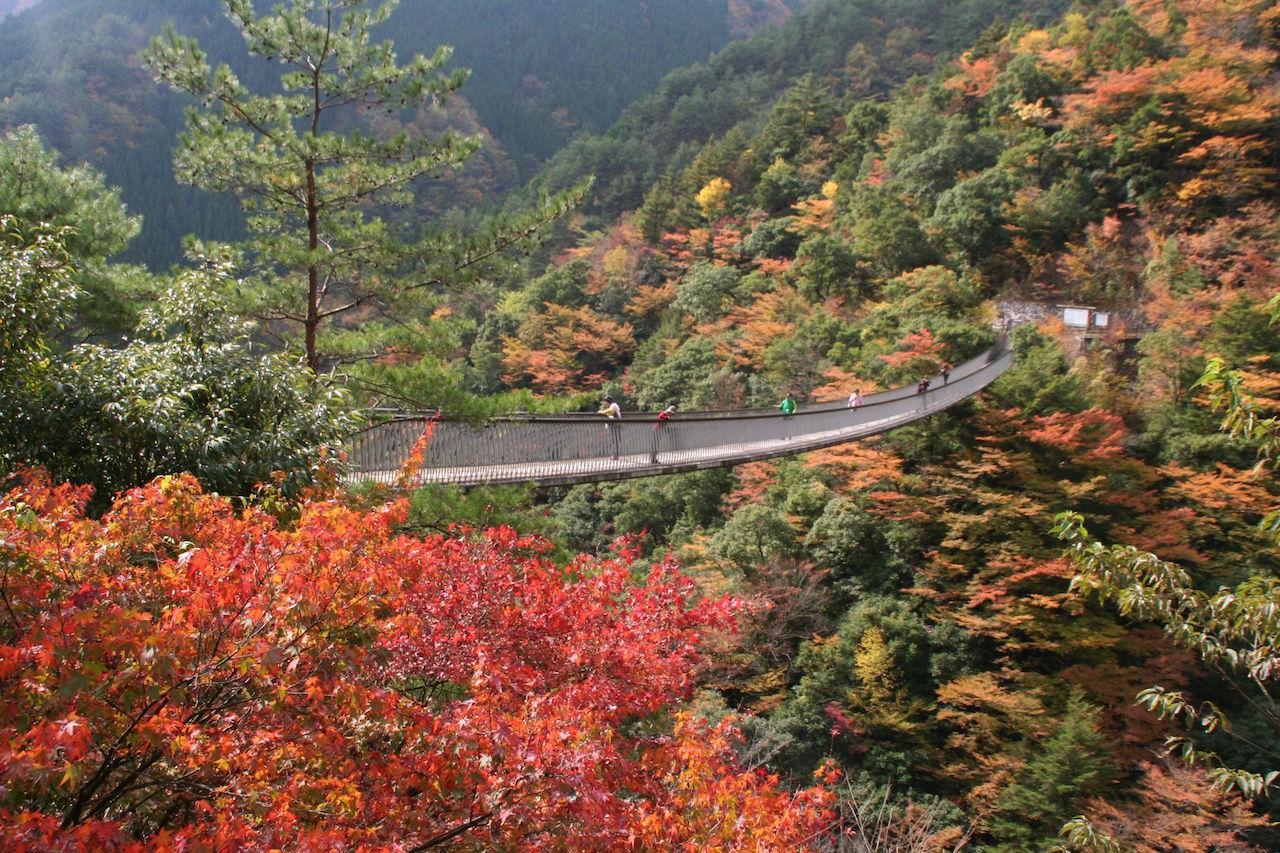 熊本県 梅の木轟(とどろ)公園吊橋