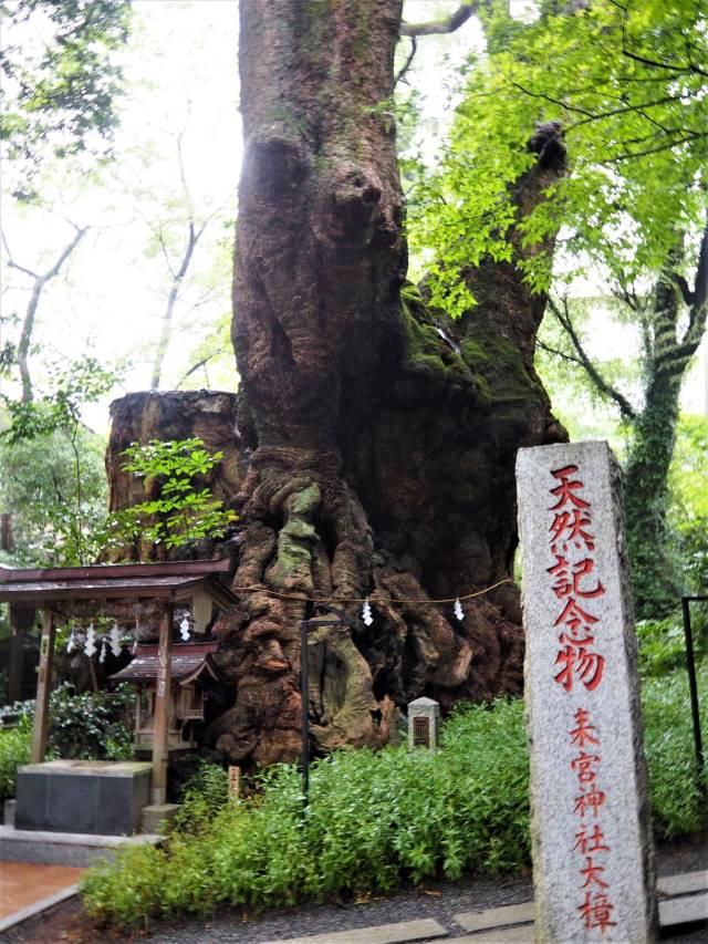 天然記念物碑