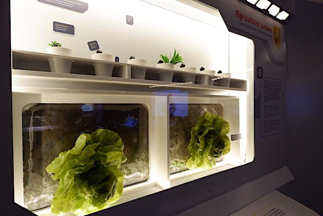 将来的には、月でも野菜や果物を