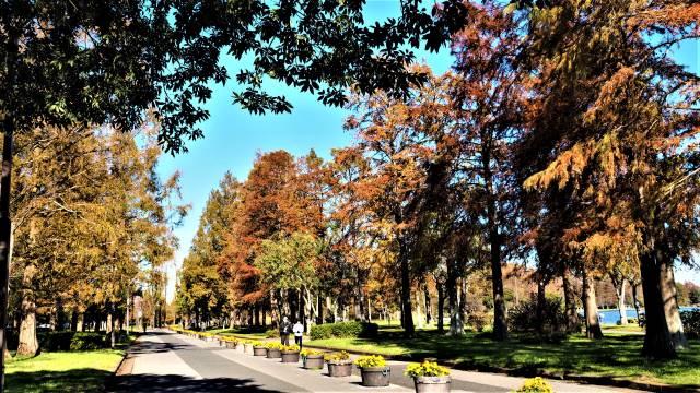 歩道と木立