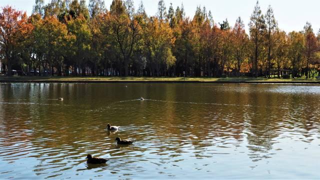 鴨池越し森