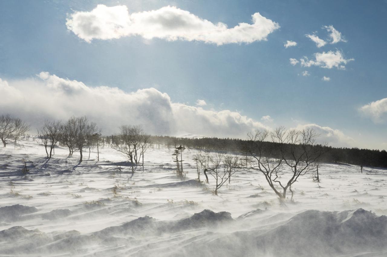 【日本の冬絶景】冬が創り出す宝石 ジュエリーアイスが見たい 東北海道の雪景色