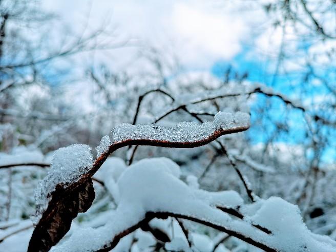 戸隠神社奥社の雪景色