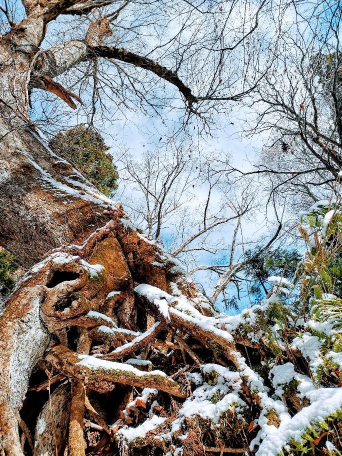 戸隠神社杉並木