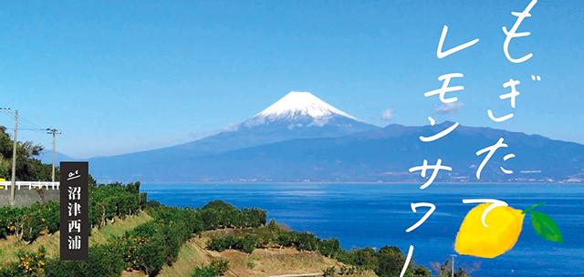 沼津コート企画産地ツアー第1弾「西浦レモン」体験