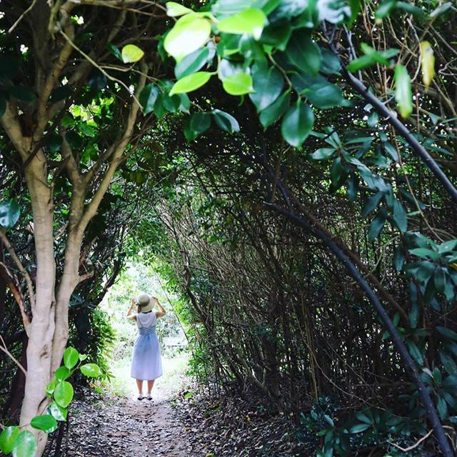 芥屋の大門(けやのおおと)公園トトロの森