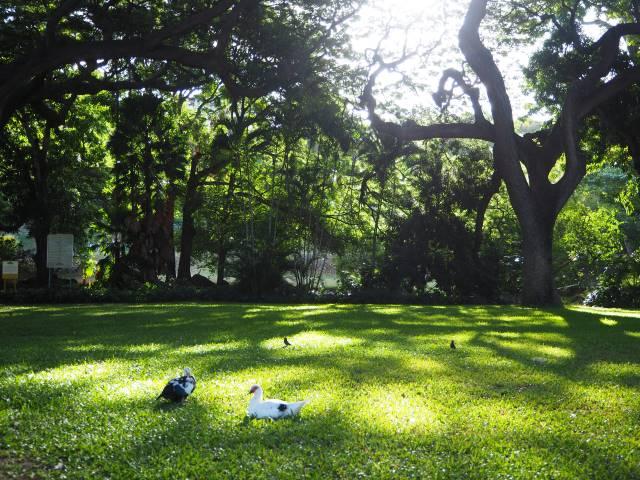 木陰で休む鳥