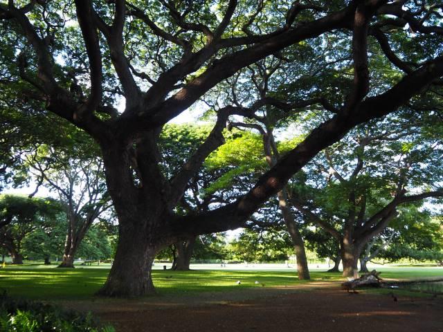樹木ロング