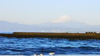 神奈川県立湘南海岸公園の海鳥