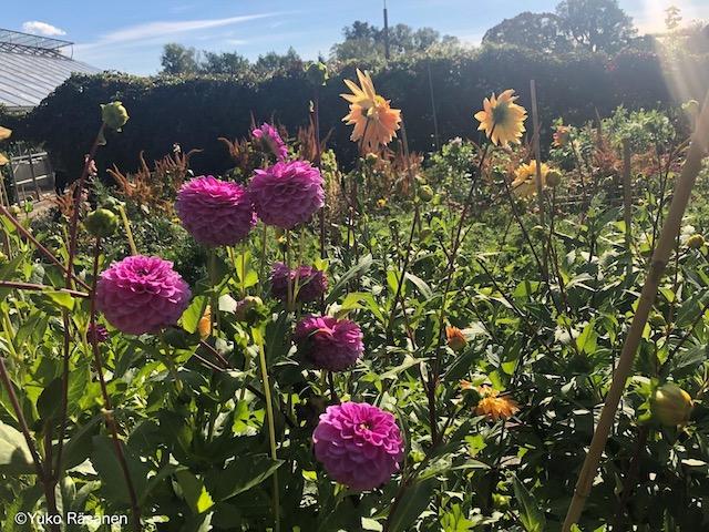 綺麗に咲く色よりどりの花