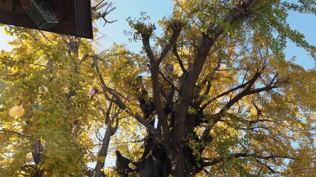 木の上の方