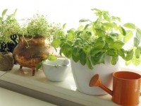 ガーデニングを始めよう、日陰・半日陰でも育つ花たち