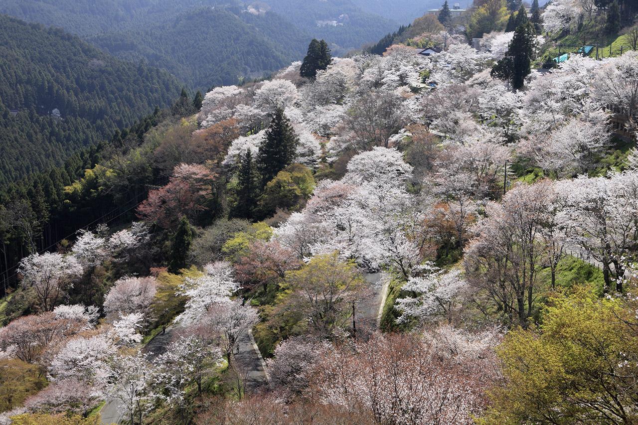 奈良県吉野山