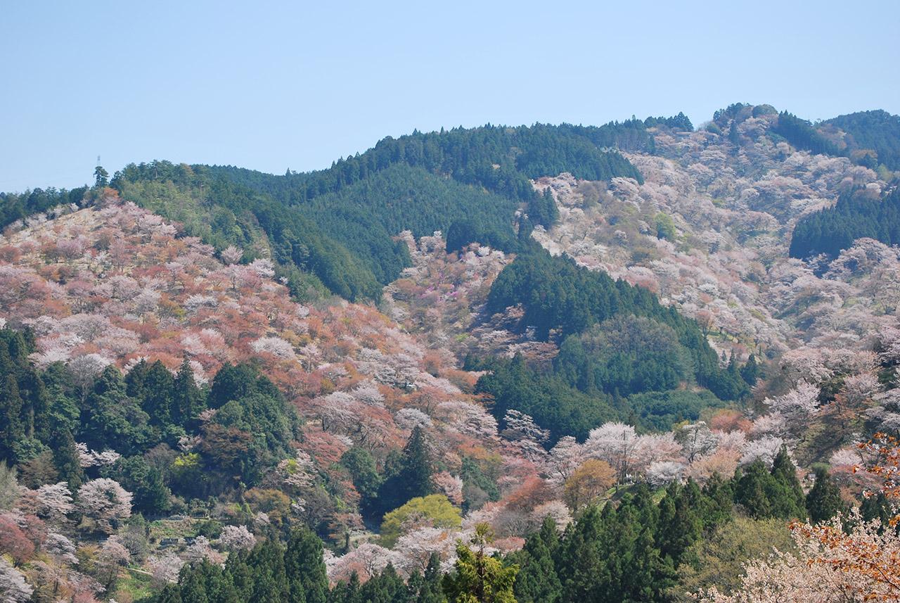 【お花見特集2020】桜の名所の代表格「吉野山」で出会う神秘の風景