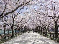 新潟県「高田公園」