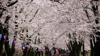 群馬県前橋市「赤城南面千本桜」