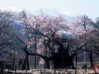 山梨県「山高神代桜」