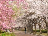 京都府亀岡市「七谷川 和らぎの道」