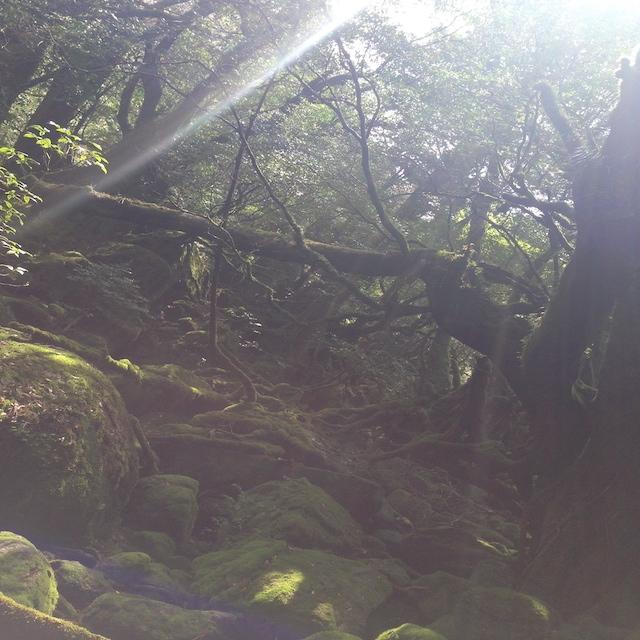 屋久島2 苔むす森