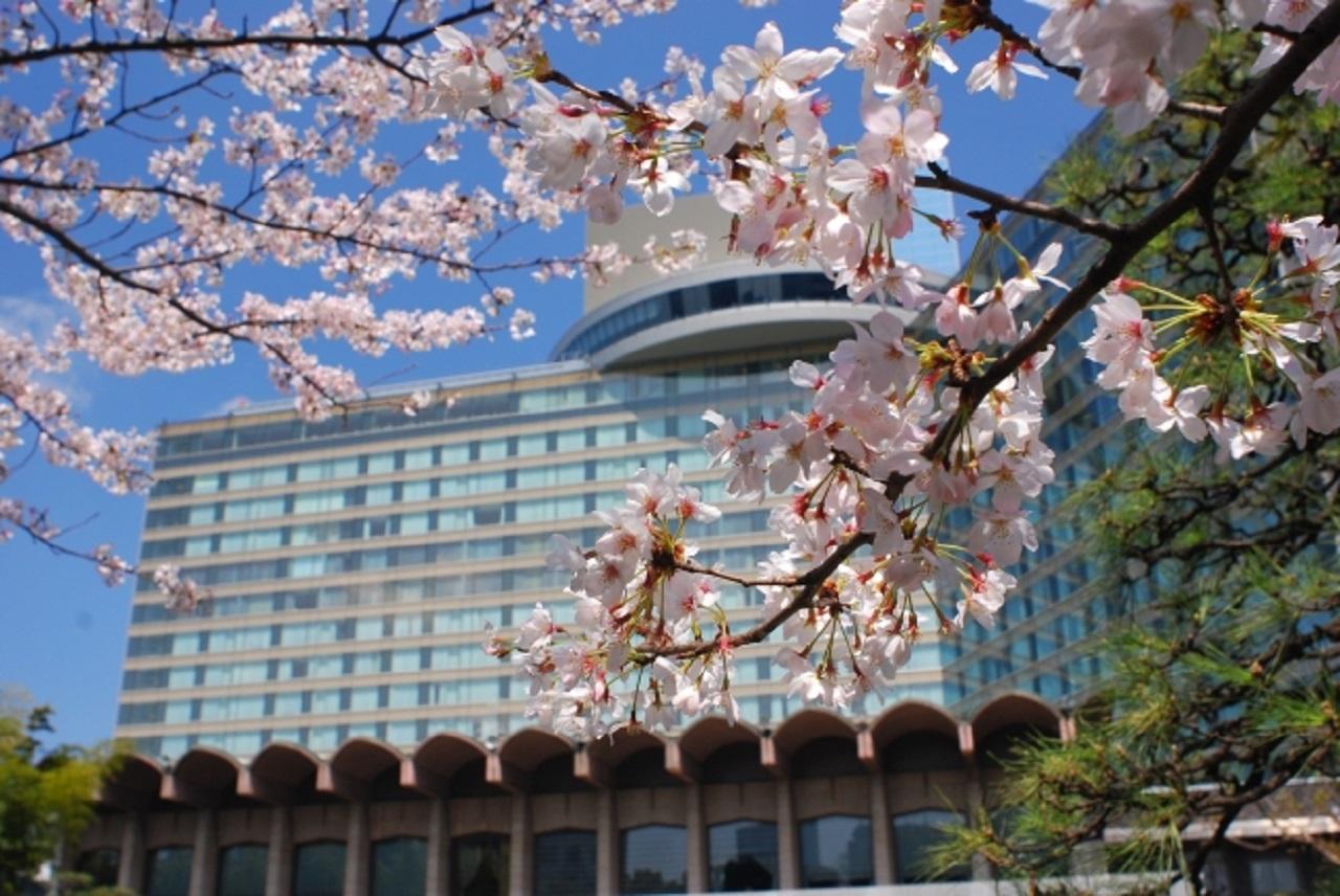 ホテルニューオータニの桜イメージ