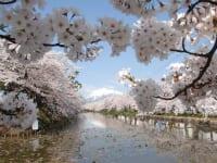青森県「弘前公園」