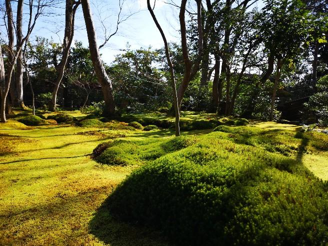 祇王寺 庭の苔