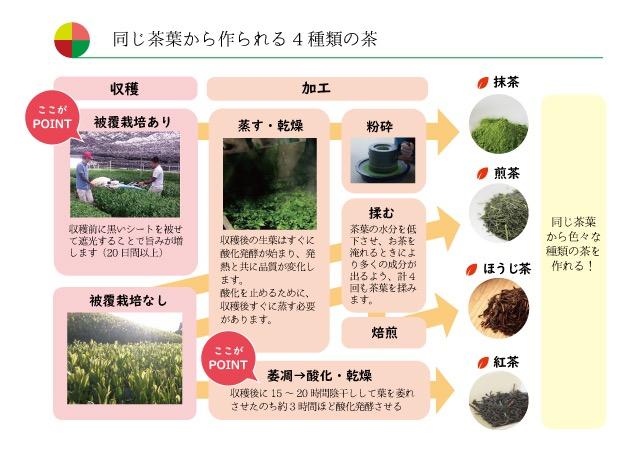 茶の豆知識