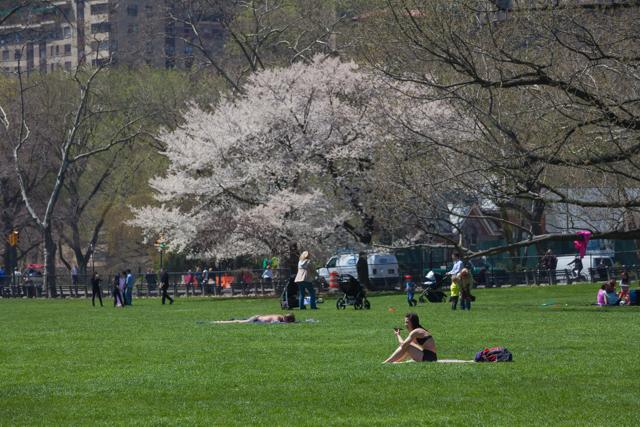 春のニューヨークは花盛り、天国があるならきっとこんな場所