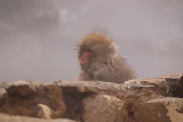 温泉 猿1