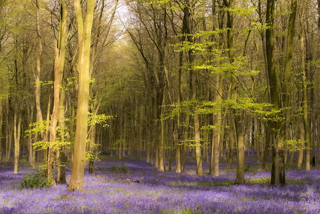 イギリス・ミッチェルデヴァーの森