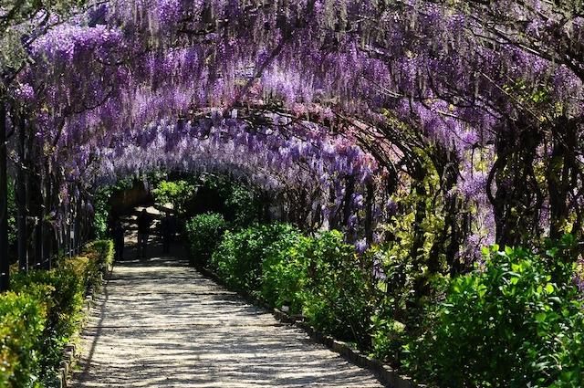 フィレンツェ・バルディーニ庭園