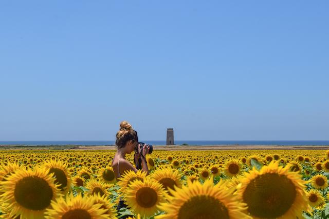 スペインのひまわり畑