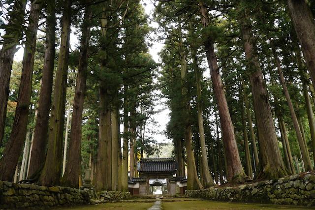 眼目山立山寺の栂並木