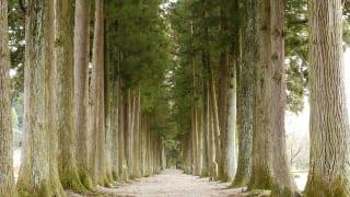 眼目山立山寺の栂並木2
