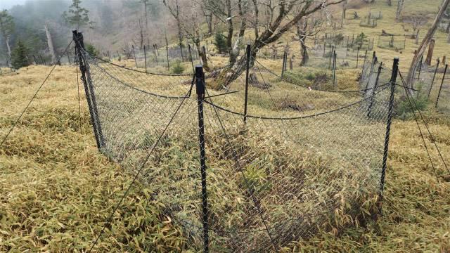 シカ防護柵