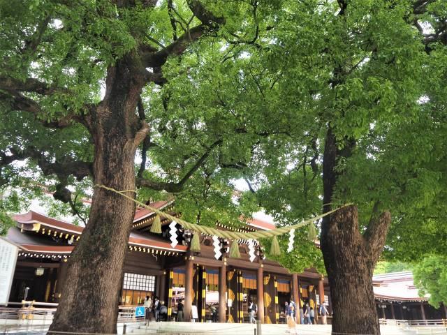 二本の木と本殿