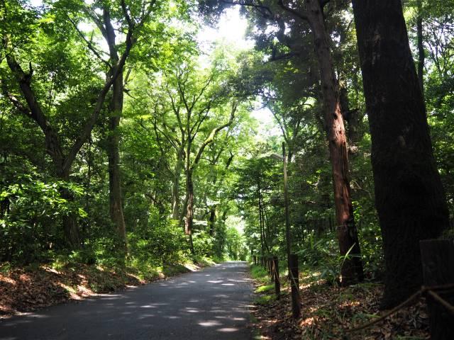 西参道への道