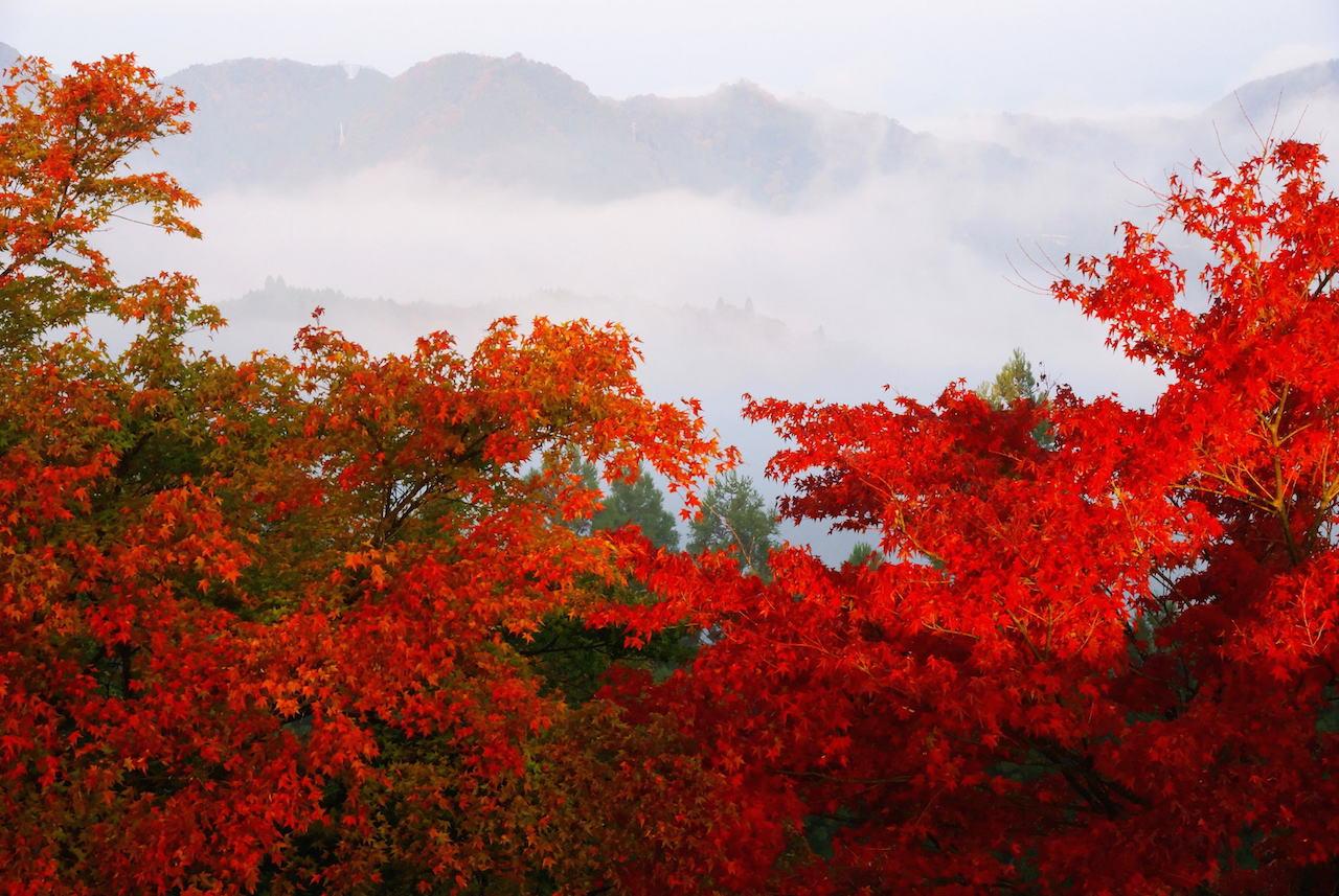 国見ヶ丘 紅葉