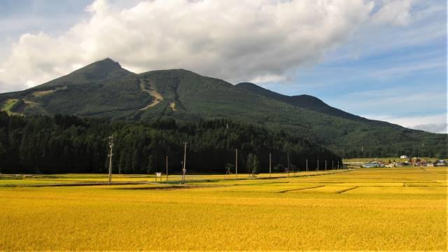 稲穂越し磐梯山