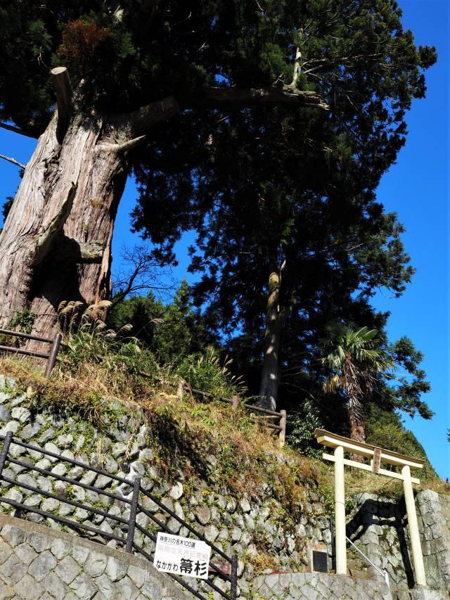 大木と鳥居