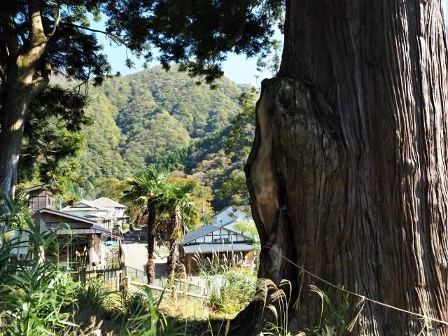 大木と集落