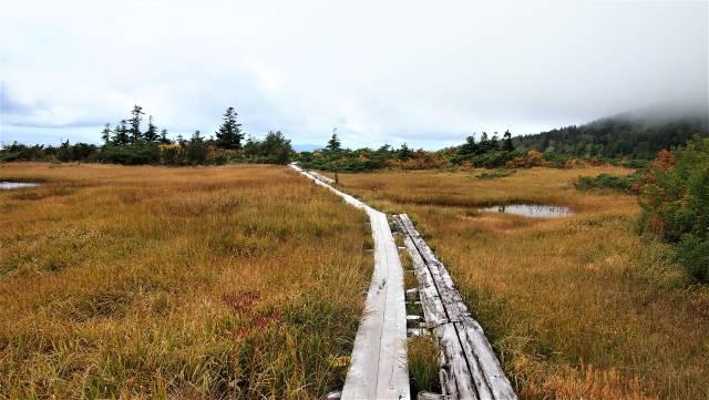 草紅葉と木道