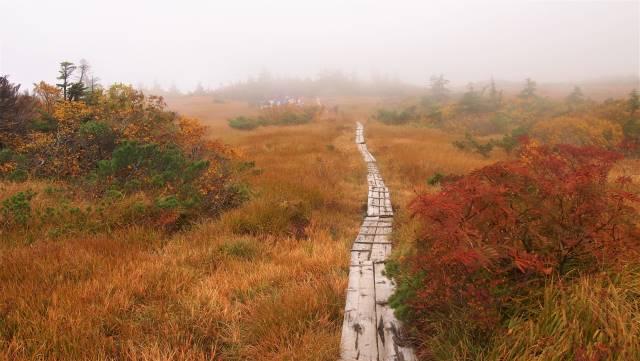 紅葉する湿原