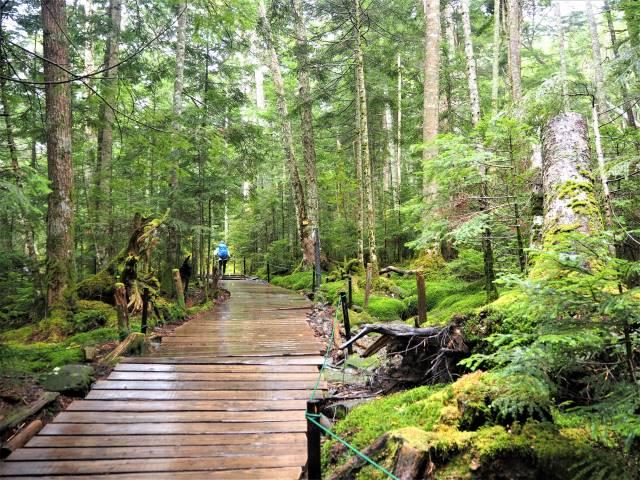 木道と木立