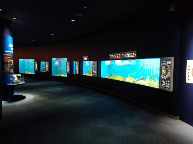 滋賀県立琵琶湖博物館水族展示室