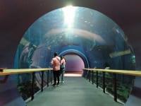 滋賀県立琵琶湖博物館水族展示室2