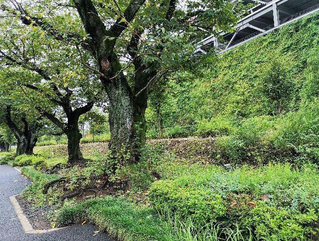 東京さんぽ・立川 ららぽーと立川立飛の立体駐車場の並木道